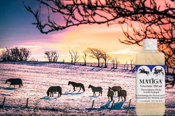 12 x 250 ml MATIGA Öl Veterinär für den Winter